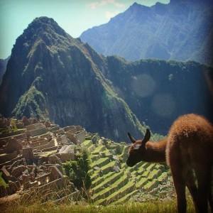 Le Machu Picchu au Pérou, avec un alpaga
