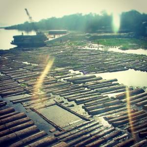 Une scierie sur le fleuve Ucayali au Pérou, quelque part en Amazonie